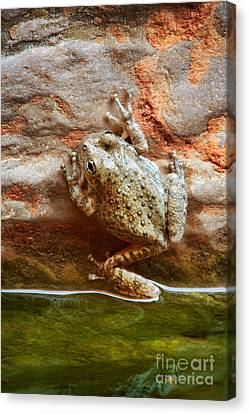 Buck Farm Frog Canvas Print by Inge Johnsson