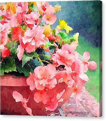 Bucket O Begonias Canvas Print