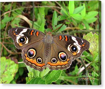 Canvas Print featuring the photograph Buckeye Butterfly by Donna Brown