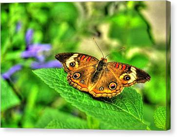 Canvas Print featuring the photograph Buckeye Butterfly by Ed Roberts