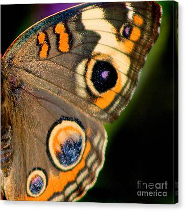 Buckeye Butterfly Wing Square Canvas Print by Karen Adams