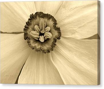 Buckeye Daffodil  Canvas Print by Chris Berry