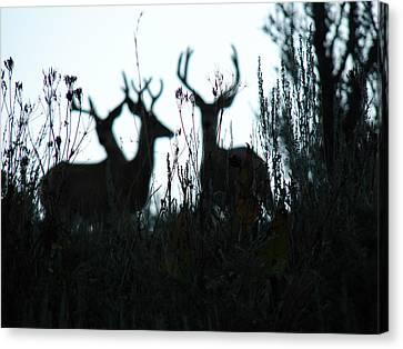 Bucks Blur Canvas Print by Carl Moore