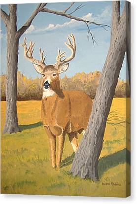 Bucky The Deer Canvas Print by Norm Starks