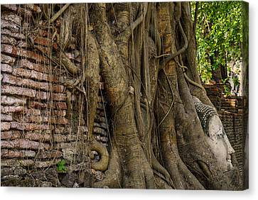Buddha Head Encased In Tree Roots Canvas Print