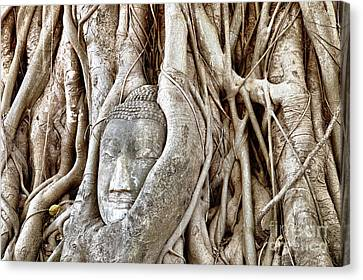 Buddha Head In Tree Wat Mahathat Ayutthaya  Thailand Canvas Print by Fototrav Print