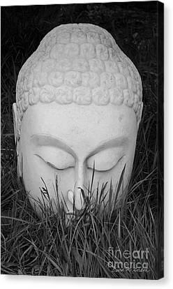 Buddha I Canvas Print by Dave Gordon