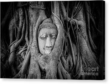 Buddha In The Banyan Tree Canvas Print by Dean Harte