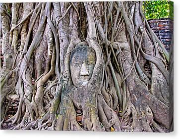Buddha's Head In A Tree Canvas Print