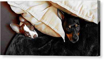Buddies Canvas Print by J Anthony