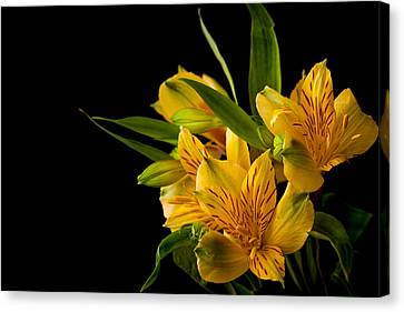 Canvas Print featuring the photograph Budding Flowers by Sennie Pierson