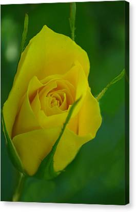 Budding Happiness Canvas Print by Rima Biswas