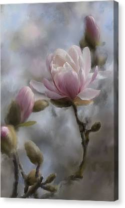 Budding Magnolia Branch Canvas Print