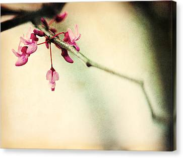 Budding Spring Canvas Print by Shannon Beck-Coatney