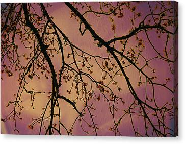 Budding Tree Canvas Print by Michele Kaiser