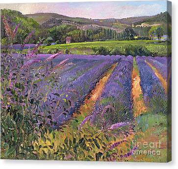 Buddleia And Lavender Field Montclus Canvas Print by Timothy Easton