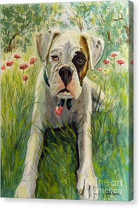 Buddy The Boxer Canvas Print