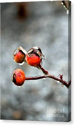 Buds On Ice Canvas Print