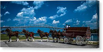 Budweiser Clydsdales And Blue Water Bridges Canvas Print