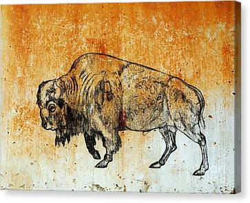 Canvas Print featuring the drawing Buffalo 8 by Larry Campbell