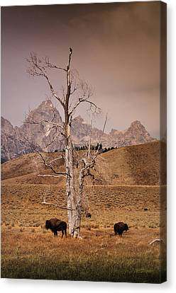 Canvas Print featuring the photograph Buffalo And Tetons by Janis Knight