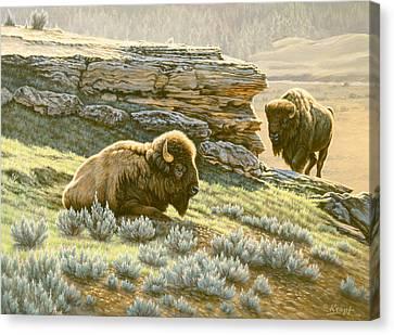 'buffalo At Soda Butte' Canvas Print by Paul Krapf
