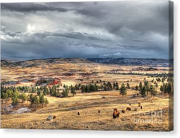 Canvas Print featuring the photograph Buffalo Before The Storm by Bill Gabbert