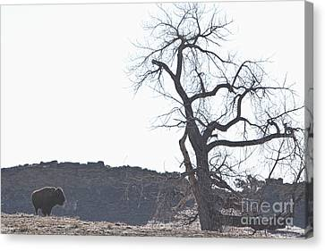 Bison Canvas Print - Buffalo Breath In The Winter Air by James BO  Insogna