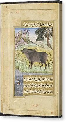 Buffalo Canvas Print by British Library