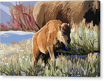 Buffalo Calf Canvas Print by Pam Little