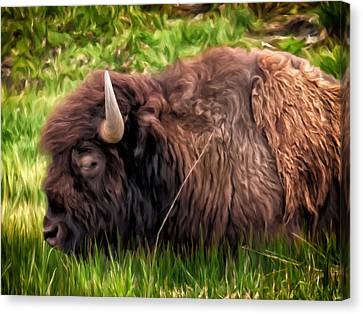Canvas Print featuring the painting Buffalo Cat Nap by Michael Pickett