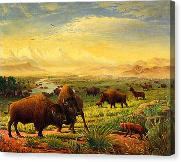 Buffalo Fox Great Plains Western Landscape Oil Painting - Bison - Americana - Historic - Walt Curlee Canvas Print by Walt Curlee