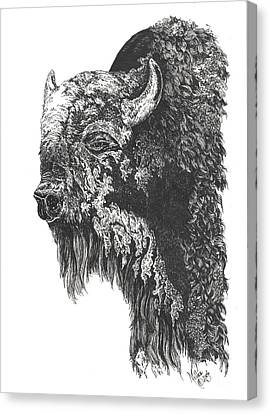 Buffalo In Spring Canvas Print