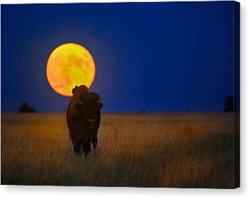 Buffalo Moon Canvas Print