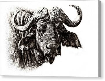 Buffalo Sketch Canvas Print