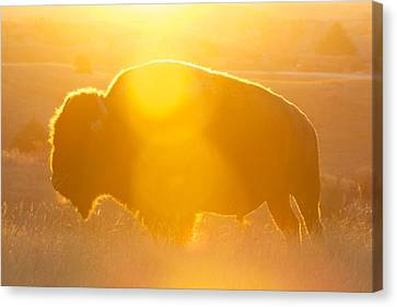 Canvas Print featuring the photograph Buffalo Sunrise by Kevin Bone