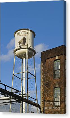 Buffalo Trace - D008739a Canvas Print by Daniel Dempster