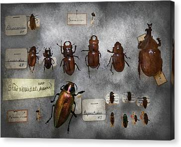 Bug Collector - The Insect Collection  Canvas Print by Mike Savad