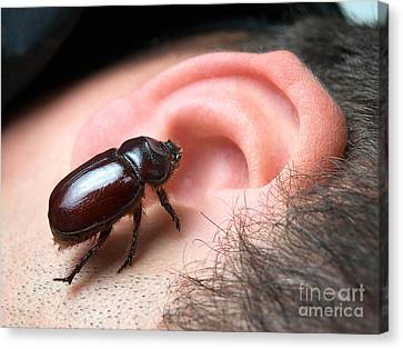 Bug In The Ear Canvas Print