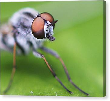 Bug Off Canvas Print by Bruce  Morrell