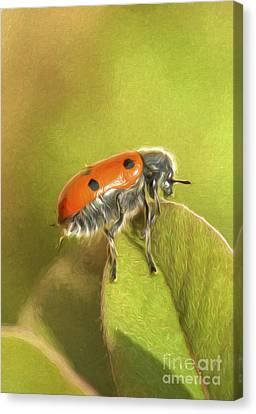 Bug On Leave Canvas Print by Perry Van Munster