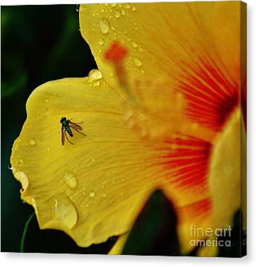 Bugged Hibiscus Canvas Print