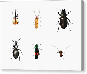 Insect Canvas Print - Bugs by Ele Grafton