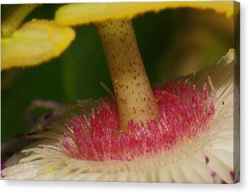 Bugs Eye View Of A Passionflower Canvas Print by Billy  Griffis Jr