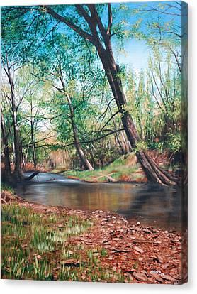 Bull Creek Canvas Print