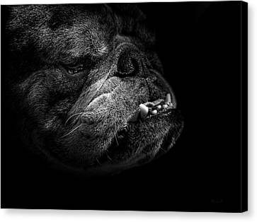 Canvas Print featuring the photograph Bull Dog by Bob Orsillo