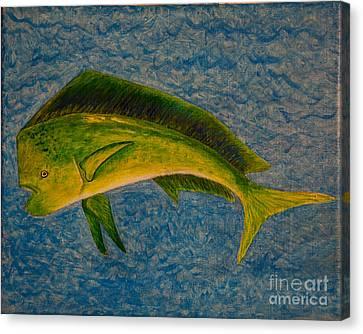 Bull Dolphin Mahimahi Fish Canvas Print