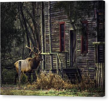 Bull Elk By The Old Boxley Mill Canvas Print by Michael Dougherty