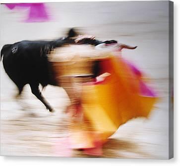 Bullfight  4 Canvas Print