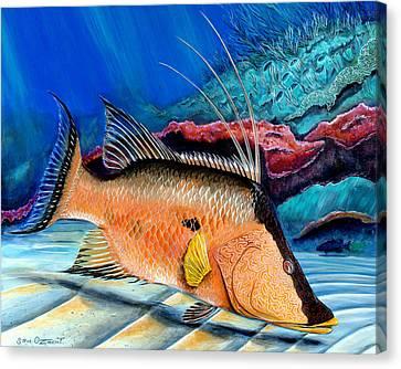 Bull Hogfish Canvas Print